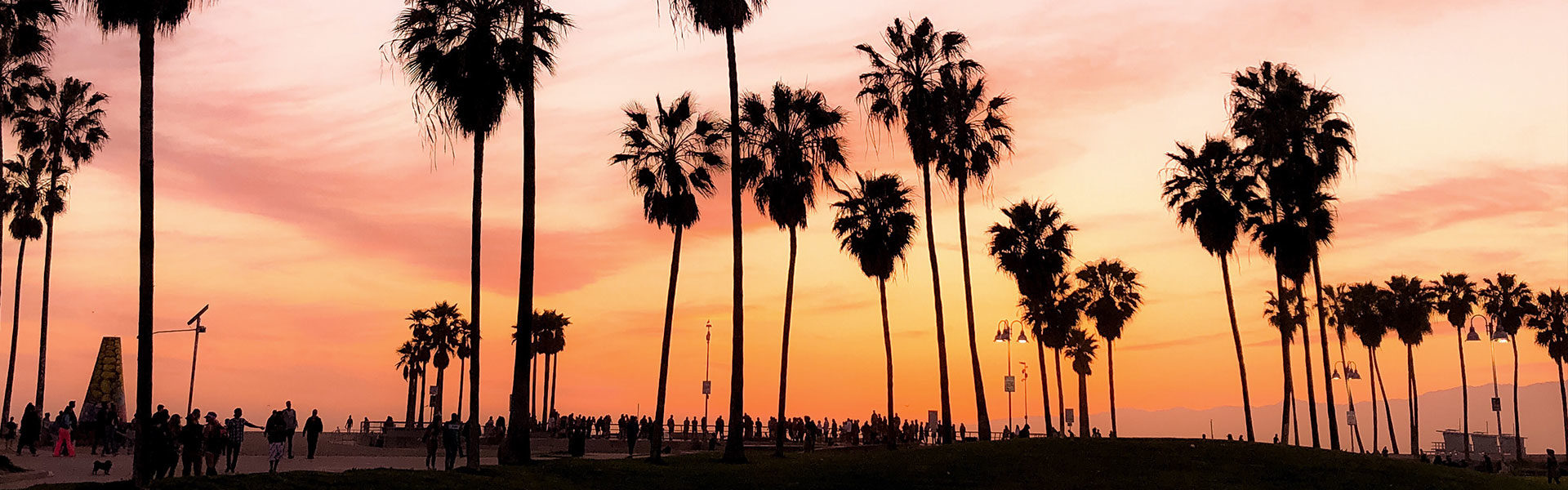venice beach palm trees
