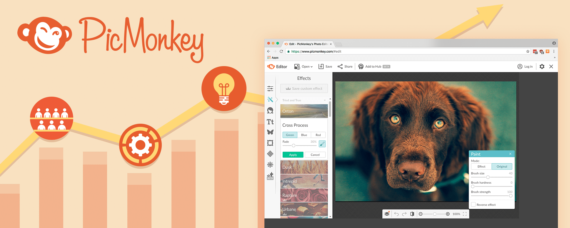 PicMonkey: Using Report Automation to Improve Decision Making & Drive Growth